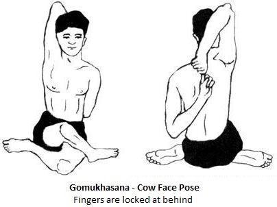 Gomukhasana or Cow Face Pose for strengthening Knees, Back & Neck
