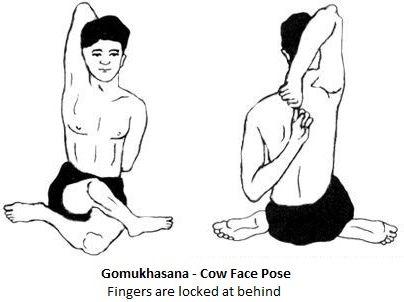 Gomukhasana Or Cow Face Pose For Strengthening Knees Back Neck