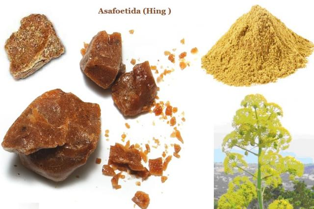 Ferula Asafoetida (Hing) Medicinal Usage, Side effects, Warnings