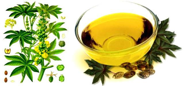 Castor Oil Plant, Seeds Medicinal Usage