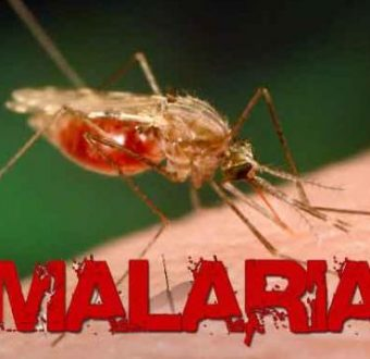 Malaria, Dengue, Chikungunya, Zika, Viral Fevers Natural Treatment