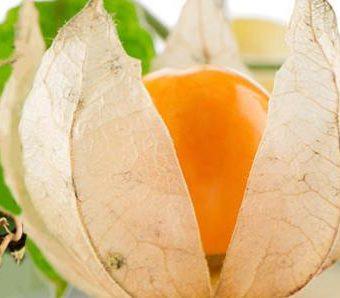 Ashwagandha Health Benefits and Usage