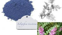 Indigofera tinctoria (True Indigo) Home Medicinal Usages for Hair, Skin