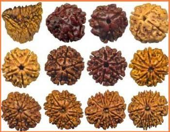 Rudraksha Beads remedy