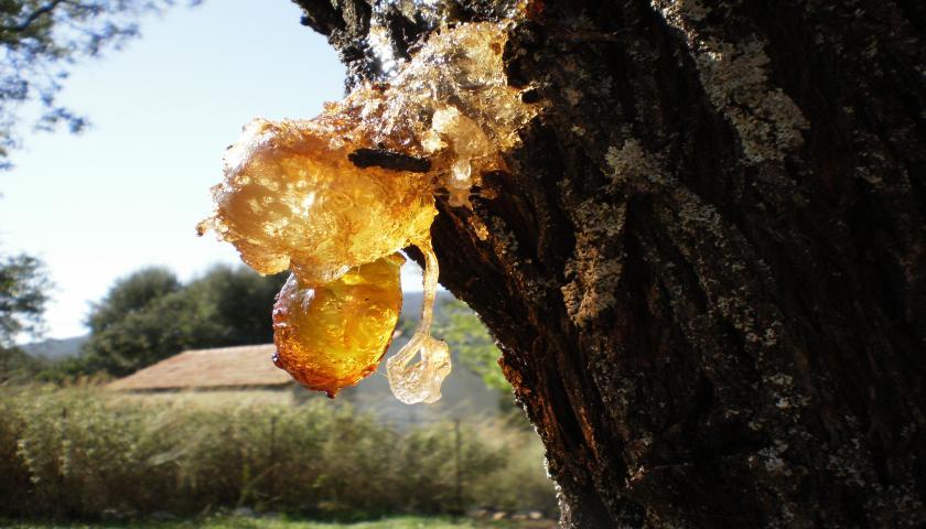 Almond Gum Resin
