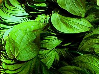 Betel Leaves in Ayurveda