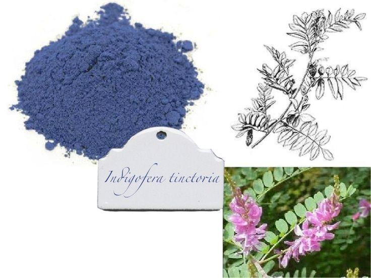 Indigofera Tinctoria True Indigo Dye
