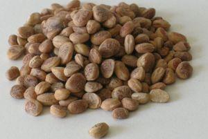 Chiroli or Chironji or Saarapappu