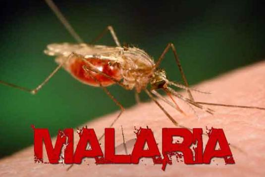 Malaria Viral Fevers Ayurvedic Treatment