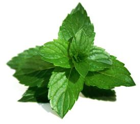 Mint Leaves in Ayurveda