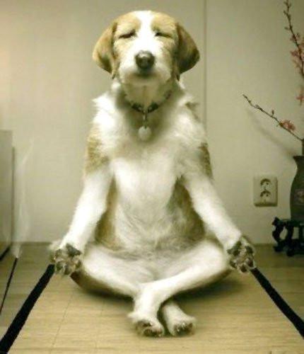 Yoga Dog Happiness Logic