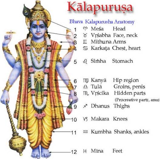 Kalapurusha - human anatomy